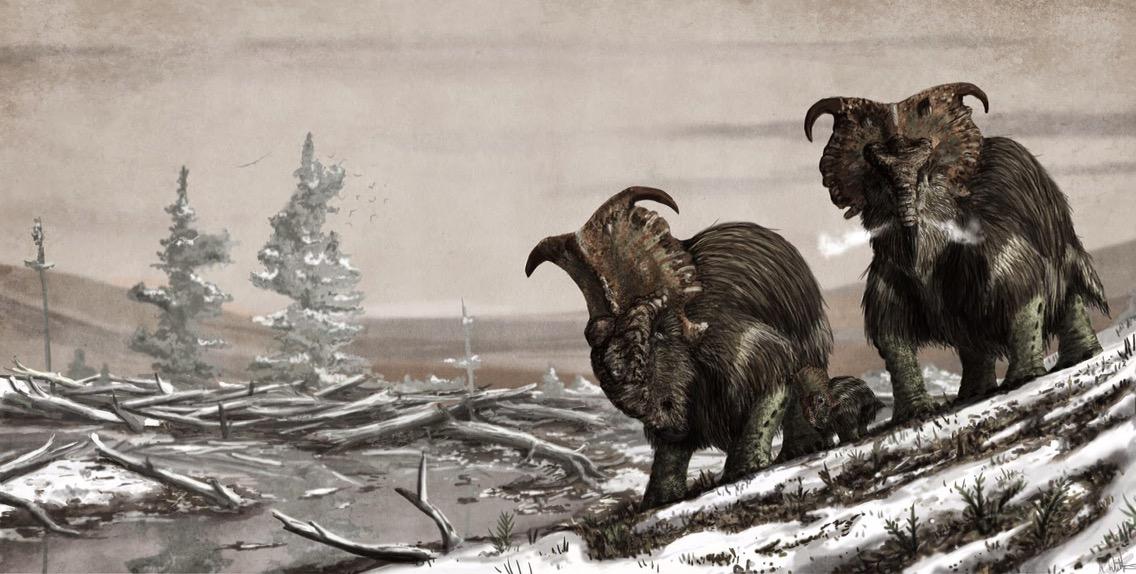 Woolly Ceratopsians